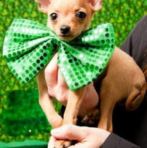 PETS LOVE ST. PATRICK'S DAY!