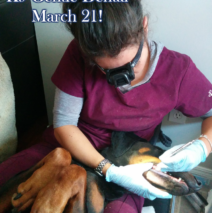 March K9 Gentle Dental Clinic
